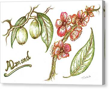 Almond With Flowers Canvas Print by Teresa White