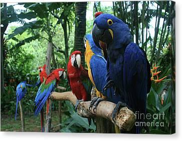 Aloha Kaua Aloha Mai No Aloha Aku Beautiful Macaw Canvas Print by Sharon Mau