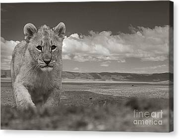 Alone... Canvas Print by Christine Sponchia