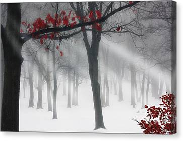 Alone In The Forest Canvas Print by Tom York Images