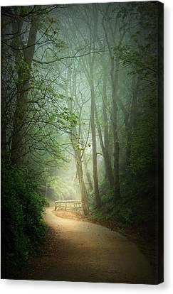 Along The Path Canvas Print by Svetlana Sewell