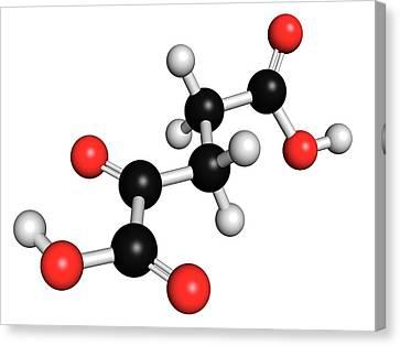 Alpha-ketoglutaric Acid Canvas Print by Molekuul