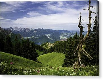 Alpine Meadow Canvas Print by Joanna Madloch