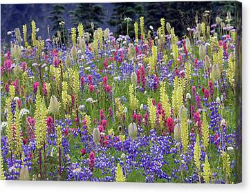 Alpine Wildflowers, Mount Rainier Canvas Print by Ken Archer