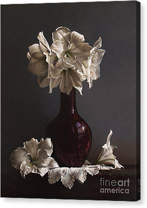 Amaryllis  Canvas Print by Larry Preston