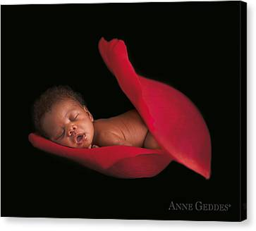 Amaya In Rose Canvas Print by Anne Geddes