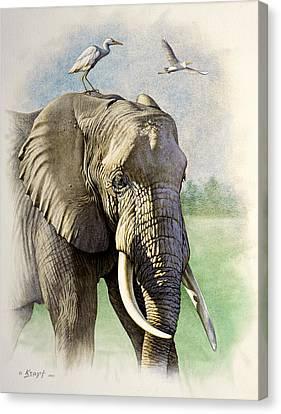 Amboseli Morning   Canvas Print by Paul Krapf