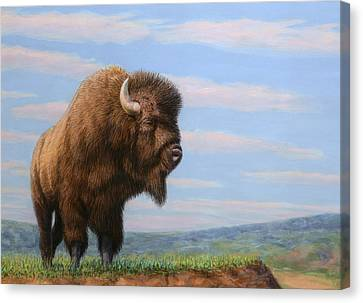 American Bison Canvas Print by James W Johnson