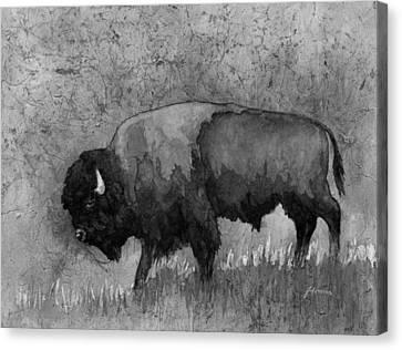 Monochrome American Buffalo 3  Canvas Print by Hailey E Herrera