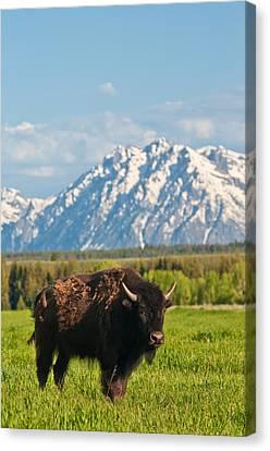 American Buffalo Canvas Print by Rich Leighton