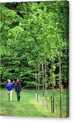 American Elm Nursery Canvas Print by Scott Bauer/us Department Of Agriculture