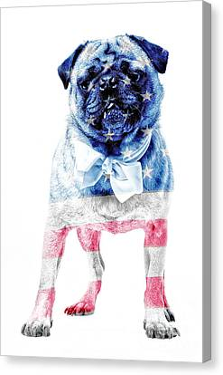 American Pug Canvas Print by Edward Fielding
