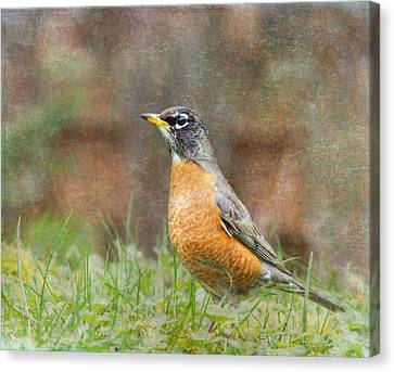 American Robin Canvas Print by Angie Vogel