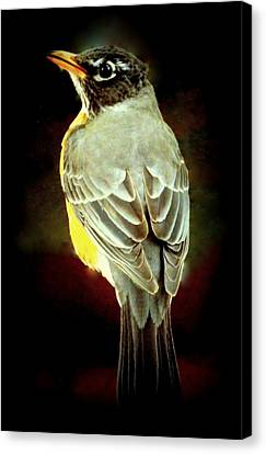 American Robin Canvas Print by Karen Wiles