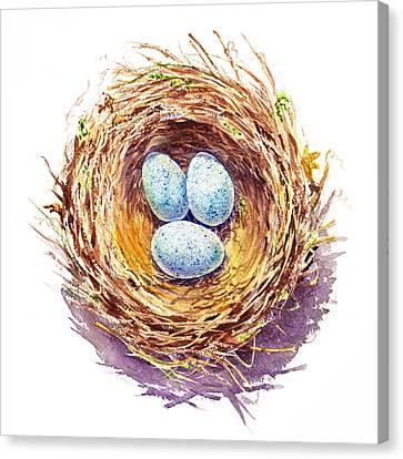 American Robin Nest Canvas Print by Irina Sztukowski
