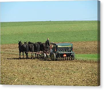 Amish Farmer In Field Canvas Print by Sara Knob