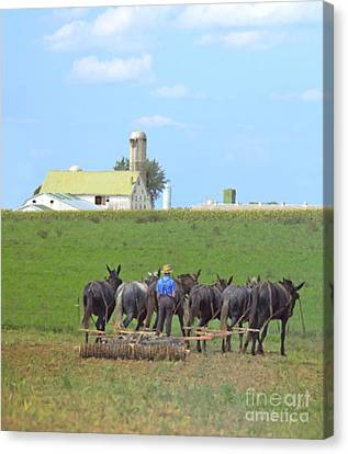 Amish Farmer Working The Land Canvas Print by Diane Diederich