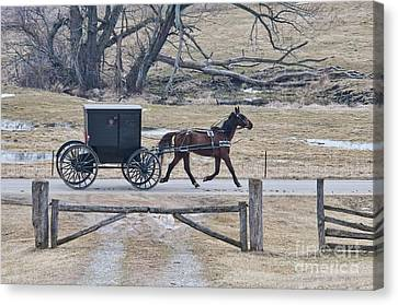 Amish Horse And Buggy March 2013 Canvas Print by David Arment