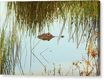 Among The Reeds Canvas Print by Lynda Dawson-Youngclaus