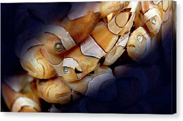 Amphiprion Sp. Canvas Print by Natural History Museum, London