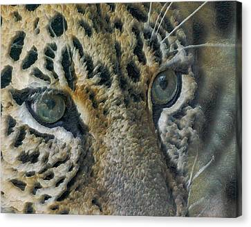 Amur Eyes Canvas Print by Ernie Echols