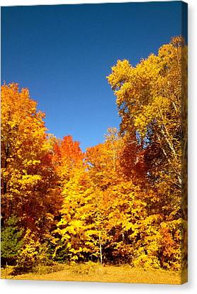 An Autumn Of Gold Canvas Print by Danielle  Broussard