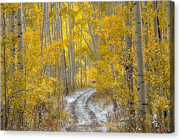 An Autumn Path Canvas Print by Leland D Howard