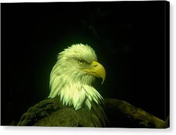 An Eagle Portrait Canvas Print by Jeff Swan