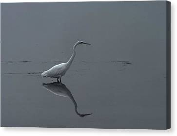 An Egret Standing In Its Reflection Canvas Print by Jeff Swan