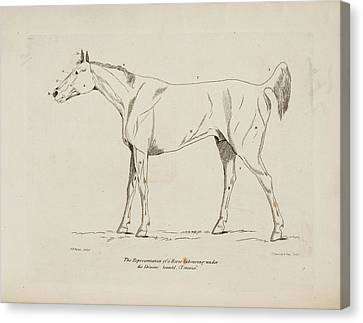 An Illustration Of A Horse Canvas Print by British Library