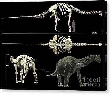 Anatomy Of A Titanosaur Canvas Print by Rodolfo Nogueira