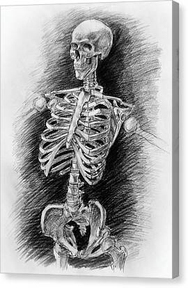 Anatomy Study Mister Skeleton Canvas Print by Irina Sztukowski