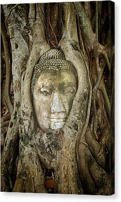Ancient Buddha Entwined Within Tree Roots In Thailand Canvas Print by Artur Bogacki