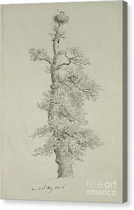 Ancient Oak Tree With A Storks Nest Canvas Print by Caspar David Friedrich