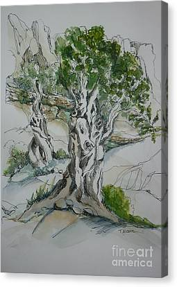 Ancient Olive Grove Canvas Print by Therese Alcorn