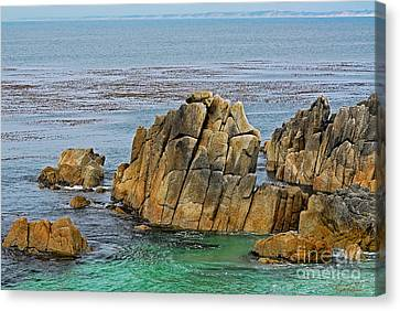 Ancient Rocks At Pacific Grove Canvas Print by Susan Wiedmann