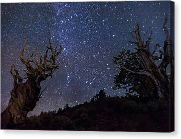 Ancients Canvas Print by Cat Connor