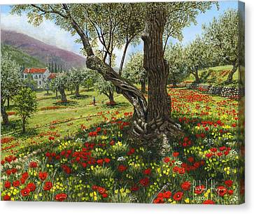 Andalucian Olive Grove Canvas Print by Richard Harpum