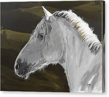 Andalusian Foal Canvas Print by Janina  Suuronen