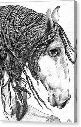 Andalusian Horse Canvas Print by Kate Black