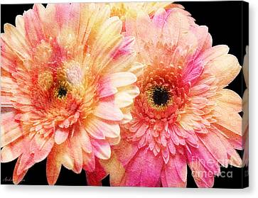 Andee Design Gerber Daisies 2 Canvas Print by Andee Design
