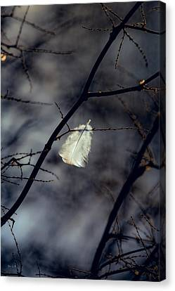 Angel Feather Canvas Print by Bob Orsillo