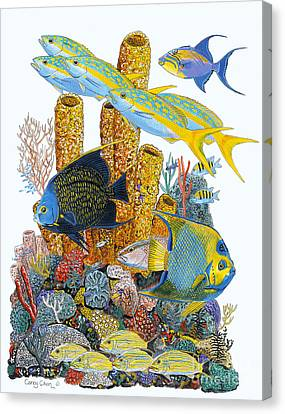 Angel Fish Reef Canvas Print by Carey Chen