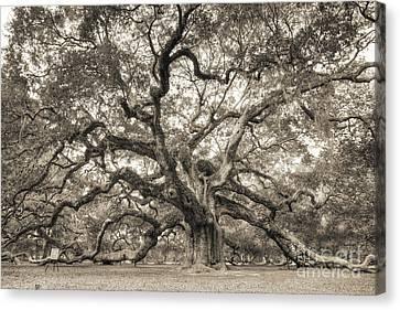 Angel Oak Tree Of Life Sepia Canvas Print by Dustin K Ryan