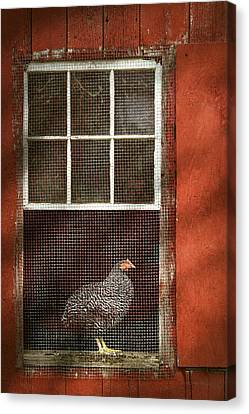 Animal - Bird - Chicken In A Window Canvas Print by Mike Savad
