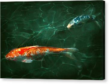 Animal - Fish - Koi - Another Fish Story Canvas Print by Mike Savad