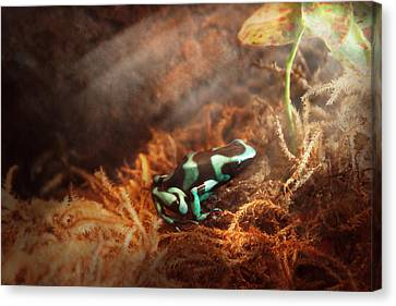 Animal - Frog - Lick The Green Frog Canvas Print by Mike Savad