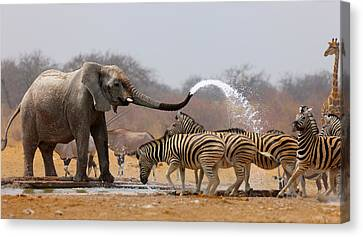 Animal Humour Canvas Print by Johan Swanepoel