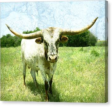 animals - cows -Longhorn in Summer Pasture Canvas Print by Ann Powell