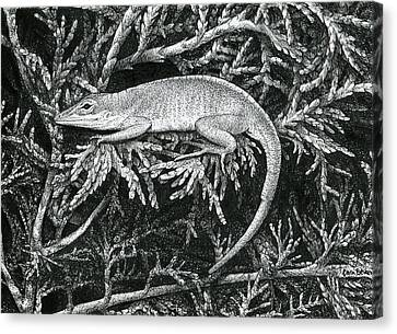 Anole Loafer Canvas Print by Cara Bevan